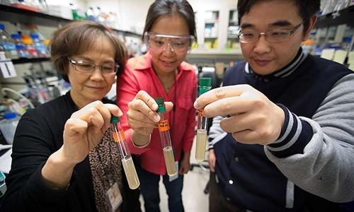 Vi khuẩn ăn CO2 chống biến đổi khí hậu hiệu quả