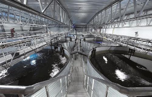 Hệ thống nuôi trồng thủy sản tuần hoàn (RAS)