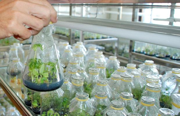 Công nghệ nuôi cấy mô thực vật